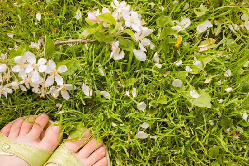 Download Парик с цветками яблони стоковое изображение. изображение насчитывающей blooping - 40577491