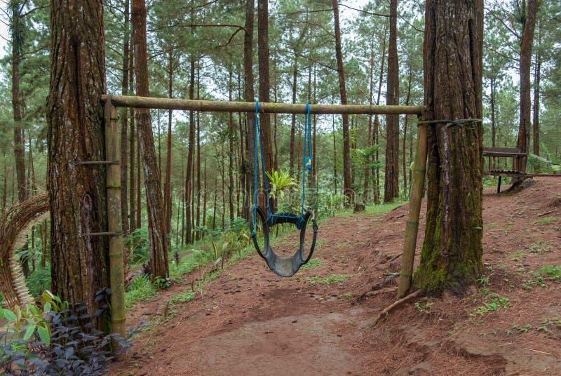 Парки в сосновых лесах оборудованы с традиционными качаниями стоковое фото rf