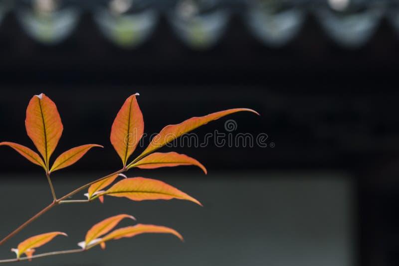 Парк акварели Китая Rugao стоковые фото