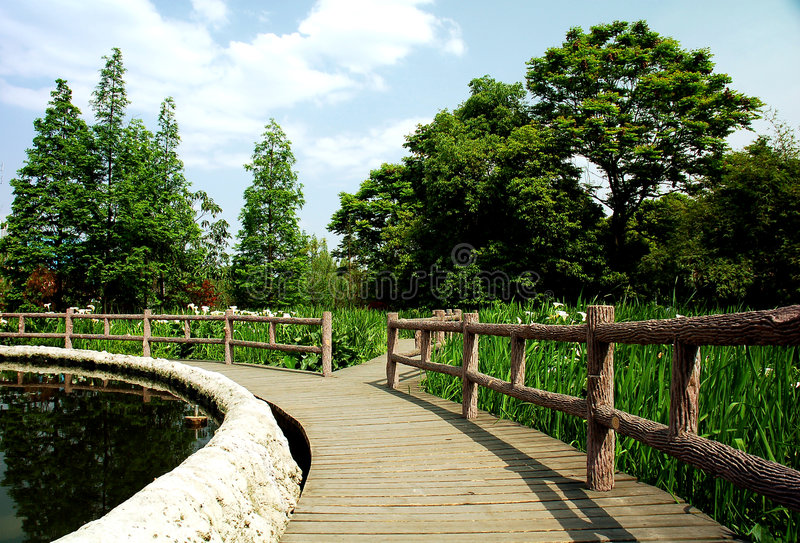 парк болотоа стоковые изображения