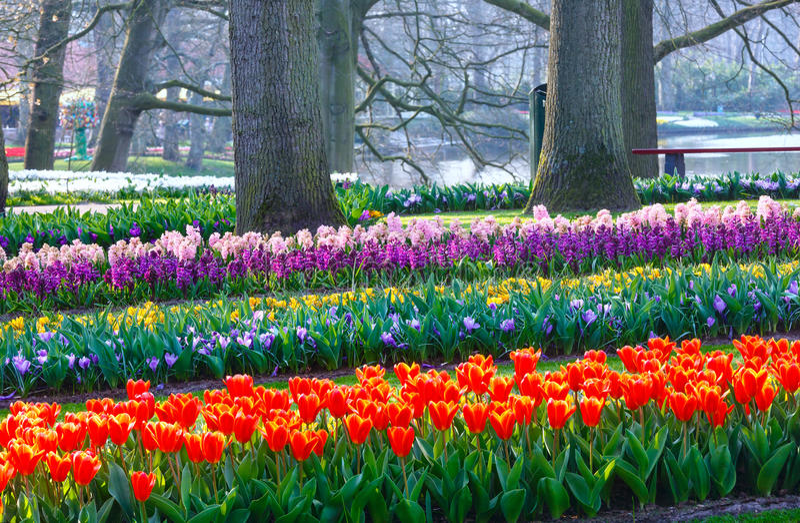 Парк весны blossoming стоковые изображения rf