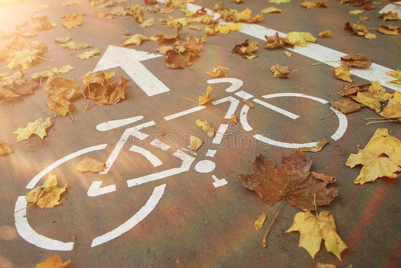 Парк велосипеда осени стоковые фотографии rf