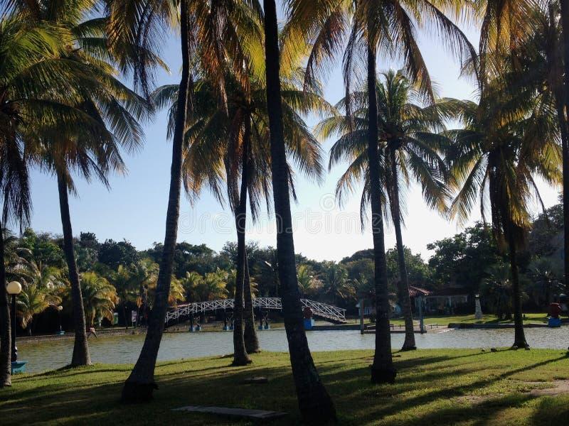 Парк в Варадеро стоковое изображение rf