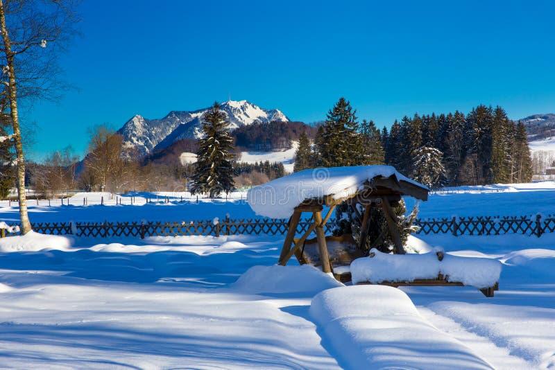Парк в зиме стоковые изображения rf