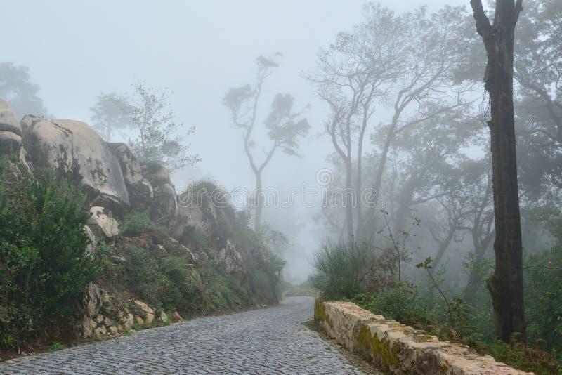 Парк в Португалии стоковые фото