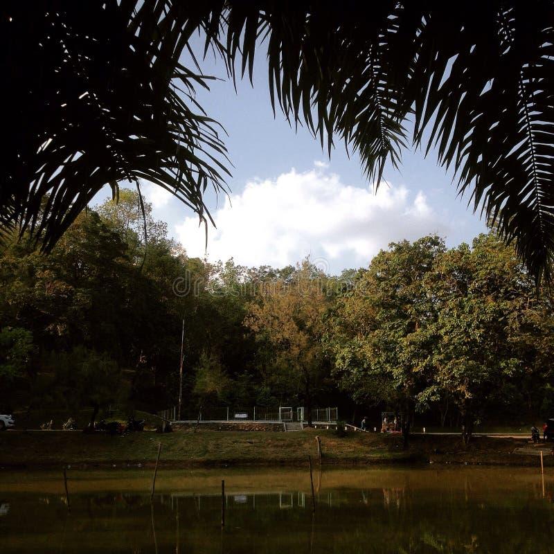 Парк в после полудня стоковые фотографии rf