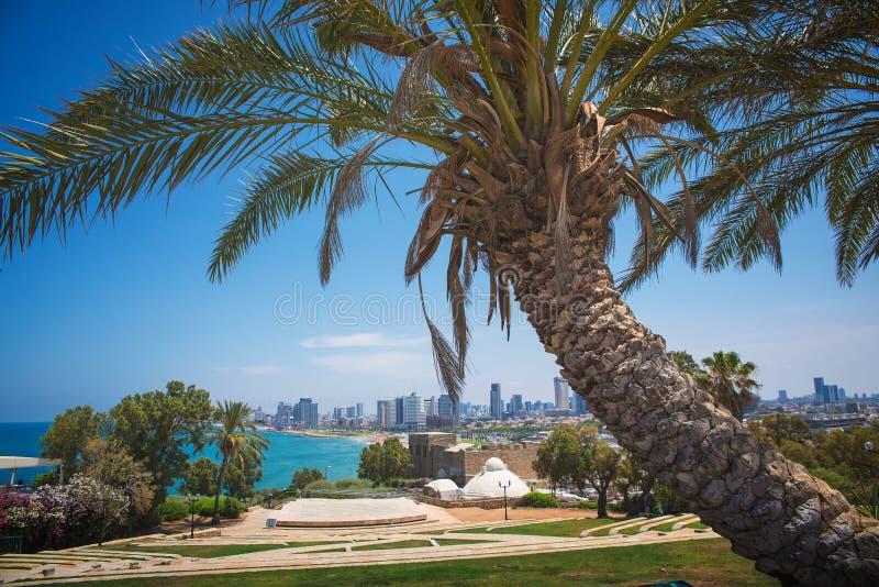 Парк в Тель-Авив стоковые изображения