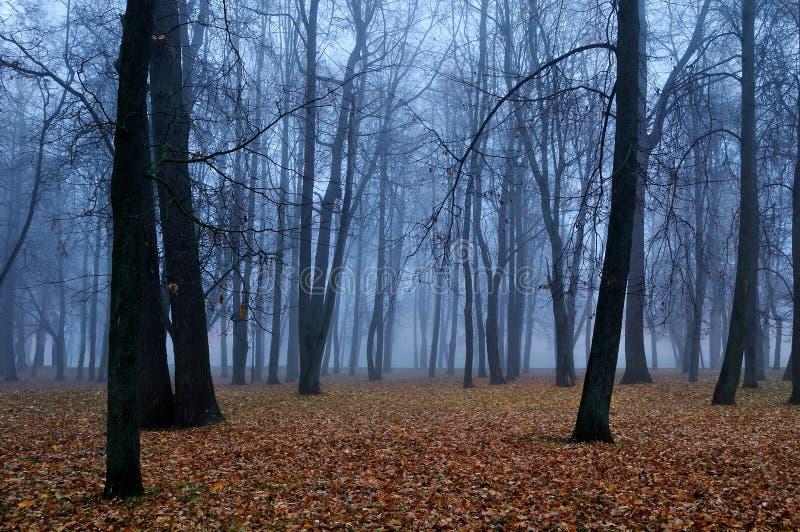 Парк в тумане - ландшафт осени осени стоковая фотография rf