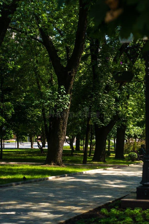 Парк города весны стоковое изображение rf