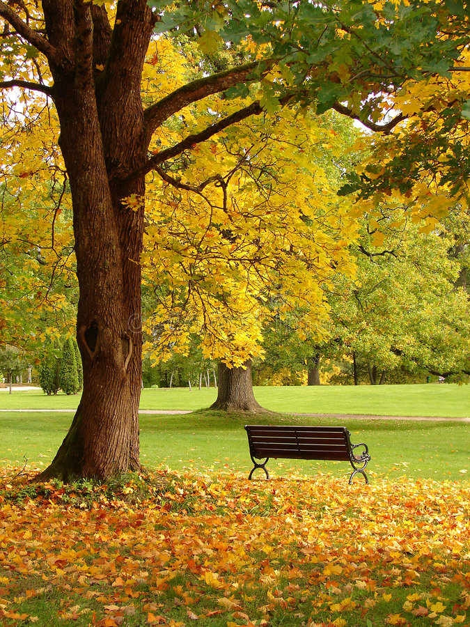 парк города осени стоковое фото