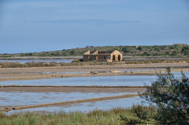 Парк где фламинго гнездятся в Сицилии стоковые изображения rf