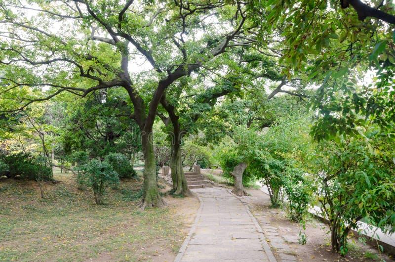 Парк деревьев весной стоковая фотография