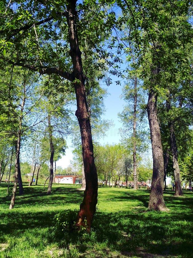 парк дня солнечный стоковые изображения rf