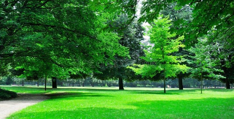 Парк лета стоковое изображение