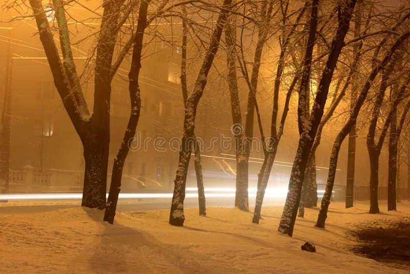 Парк зимы ночи стоковые фотографии rf