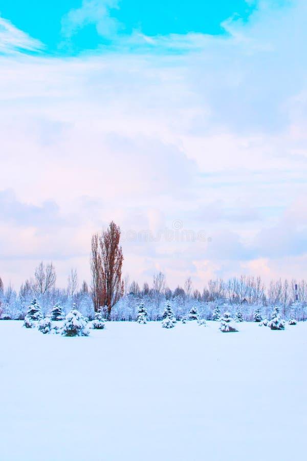 Парк зимы с деревьями, драматическим облачным небом и снегом стоковые фотографии rf