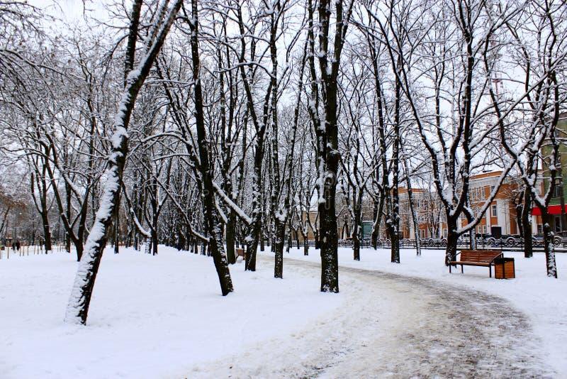 Парк зимы с много больших деревьев и путем стоковая фотография