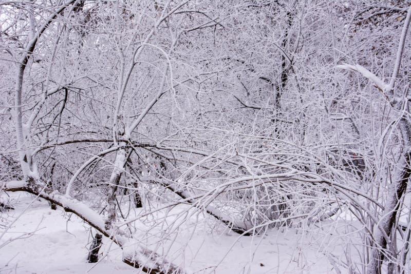 Парк зимы ulyanovsk стоковое изображение rf