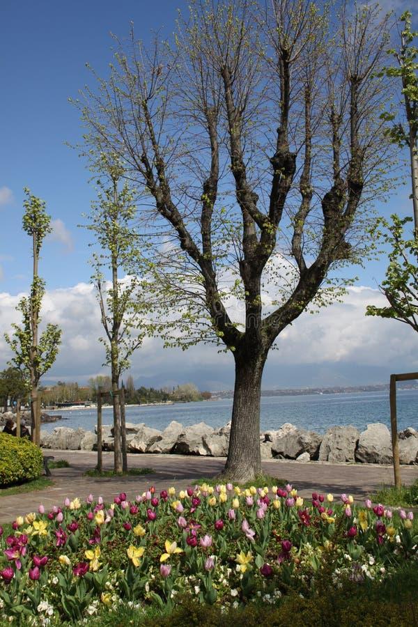 Парк и озеро весны стоковые изображения