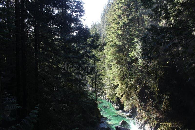 Парк каньона Lynn стоковое изображение rf