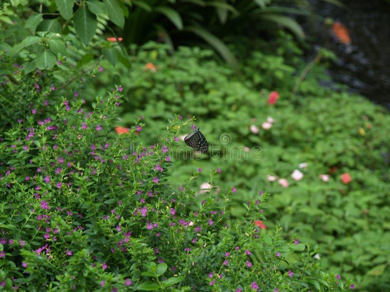 Парк Малайзия бабочки Куалаа-Лумпур стоковые изображения