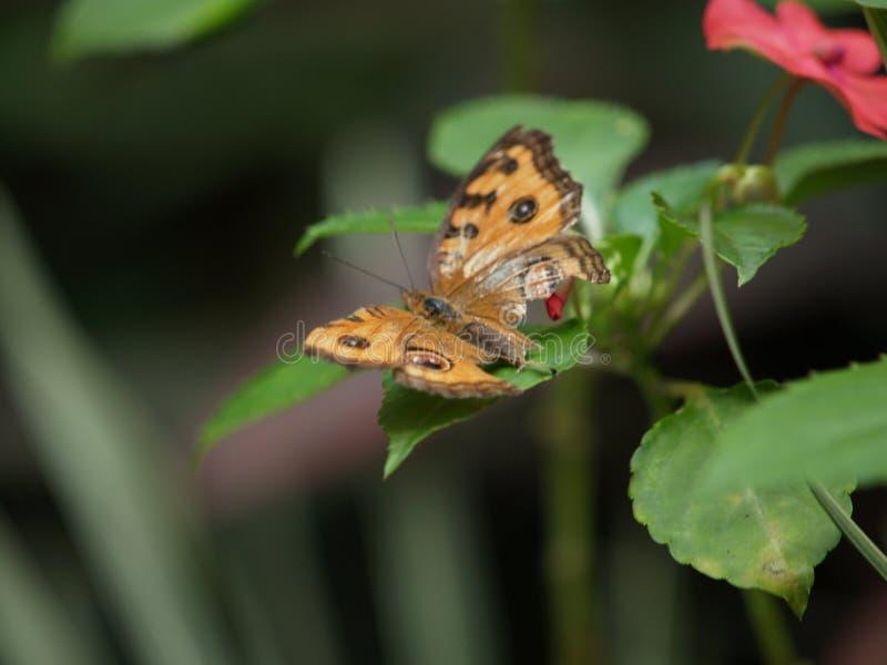 Парк Малайзия бабочки Куалаа-Лумпур стоковая фотография rf