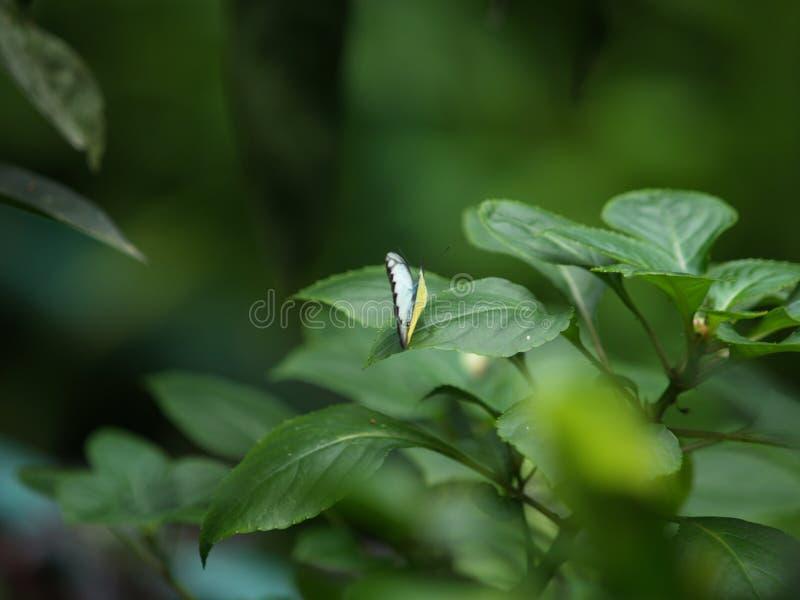 Парк Малайзия бабочки Куалаа-Лумпур стоковые изображения rf