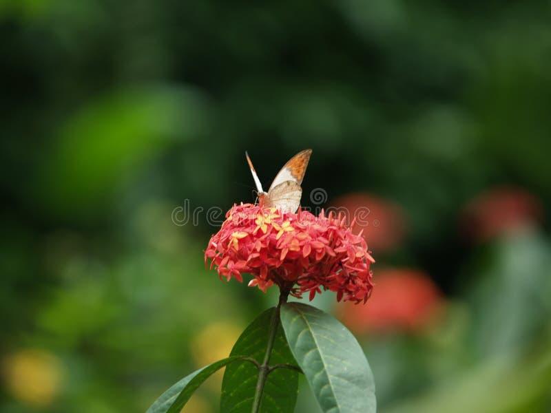 Парк Малайзия бабочки Куалаа-Лумпур стоковое изображение