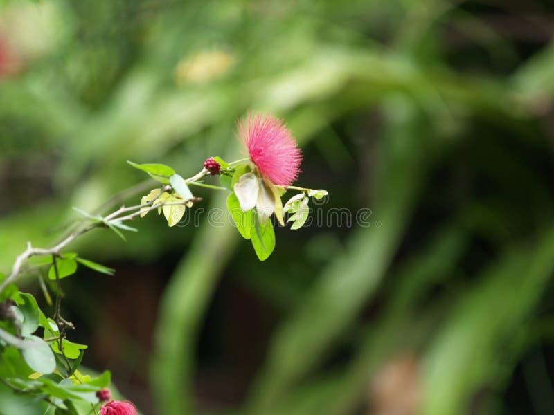 Парк Малайзия бабочки Куалаа-Лумпур стоковые фотографии rf