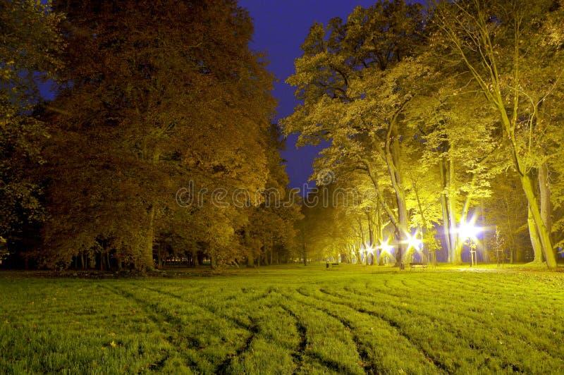 Парк на ноче стоковое фото rf