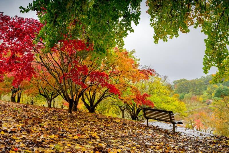 Парк осени во время дождя стоковое изображение