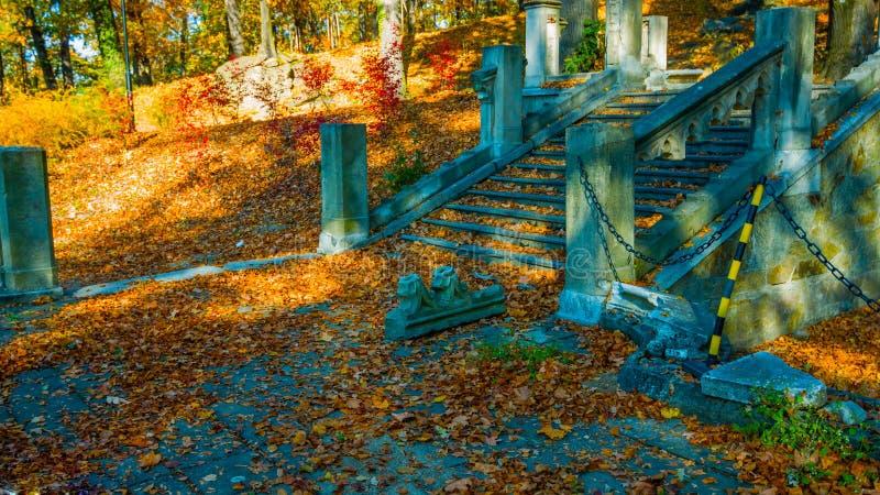 Парк осени Ландшафт осени Лестница вверх и вниз в парке осени Цветастые листья Красивый день в ярком падении - Bilder стоковое фото rf