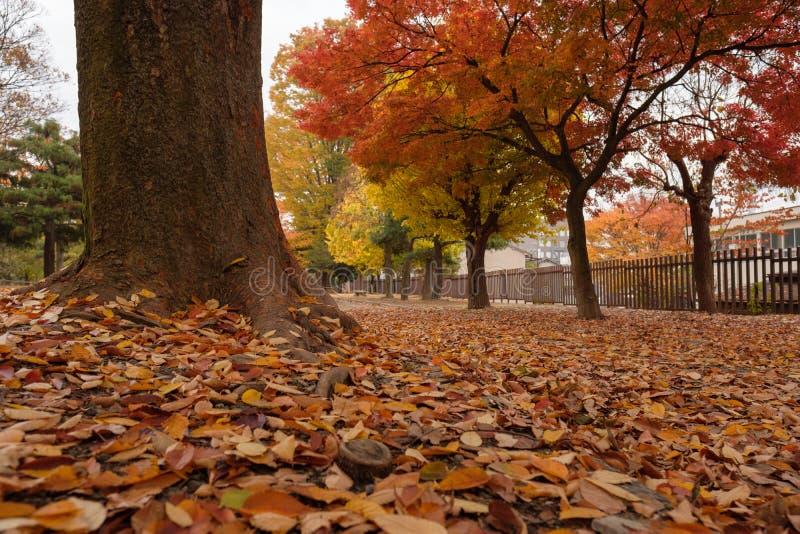 парк осени цветастый стоковое фото rf