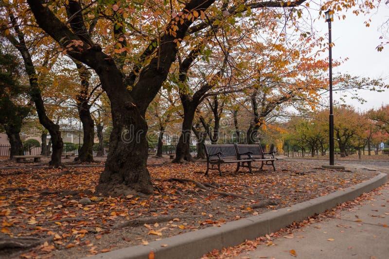 парк осени цветастый стоковые изображения rf