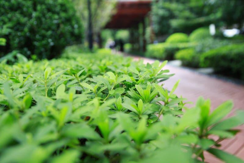 Парк осени стоковая фотография rf