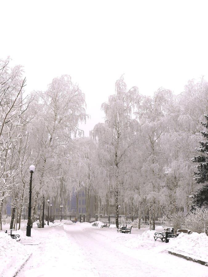 парк переулка снежный стоковое фото