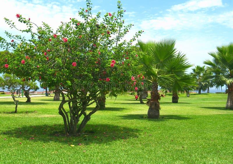 парк Перу lima стоковые фото
