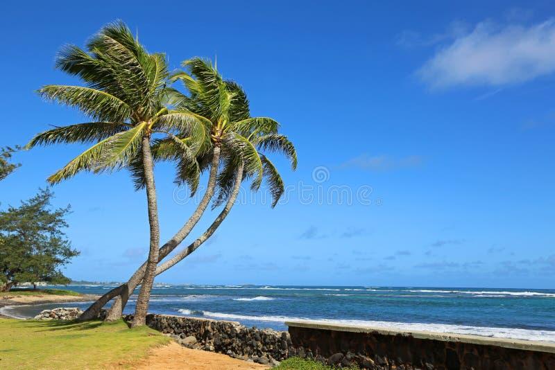 Парк пляжа Hau'ula, Оаху, Гаваи стоковое изображение
