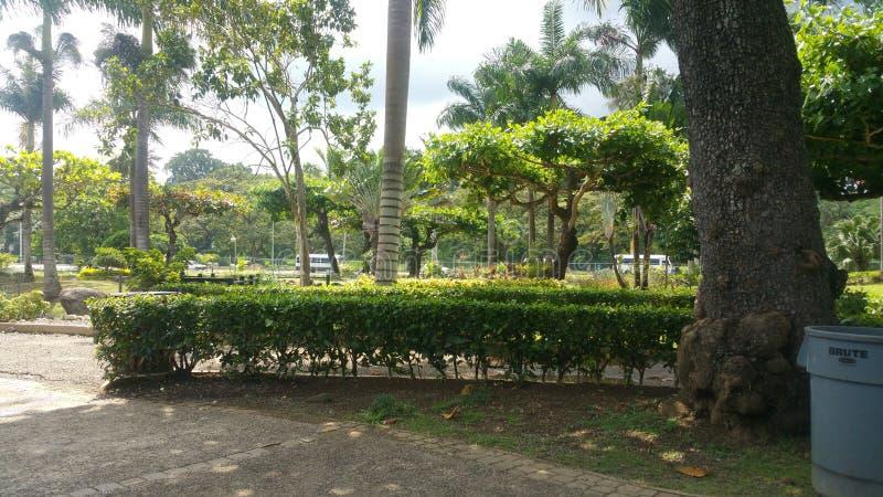 Парк реки черепахи стоковые фотографии rf