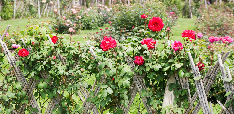 Парк роз стоковые изображения