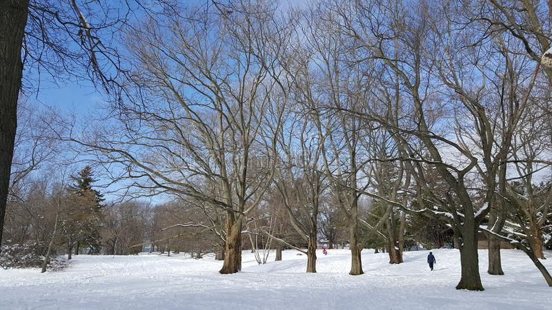 Парк снега стоковое фото