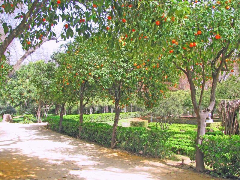 Парк с оранжевыми деревьями в парке стоковые фотографии rf