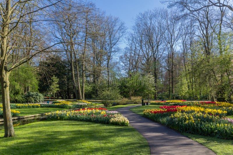 Парк с пестроткаными цветками весны с фунтом стоковые изображения rf