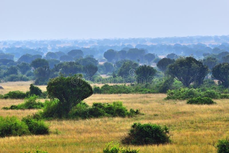 Парк ферзя Элизабета, Уганда стоковое фото