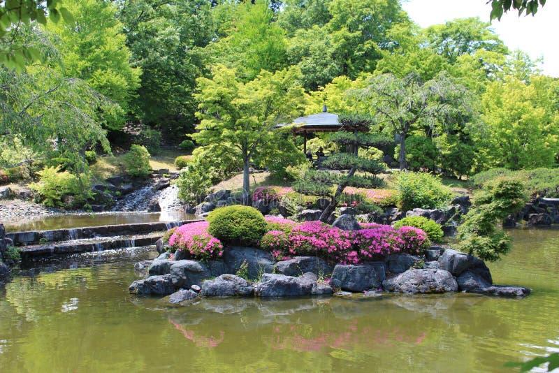 Парк цветения chery зимы стоковое фото rf