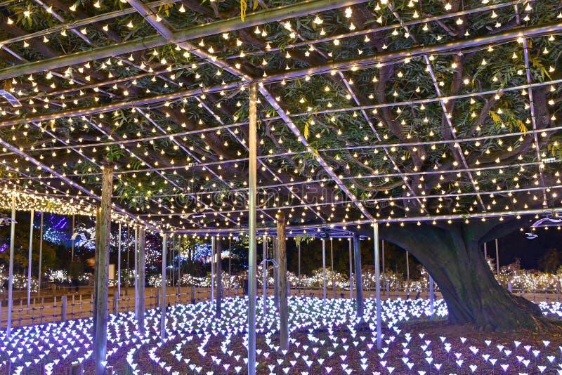 Парк цветка Ashikaga, Tochigi, Япония стоковое изображение