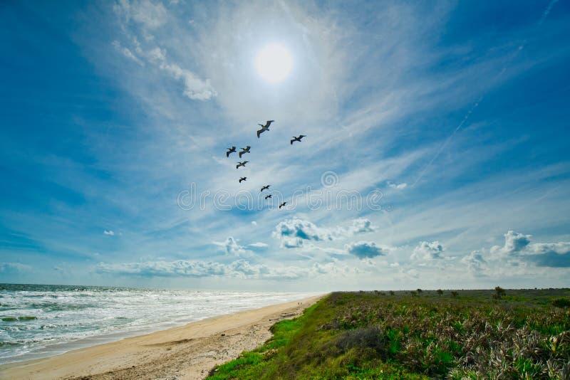 Парк штата Анастасии, Августин Блаженный, Флорида стоковые фотографии rf