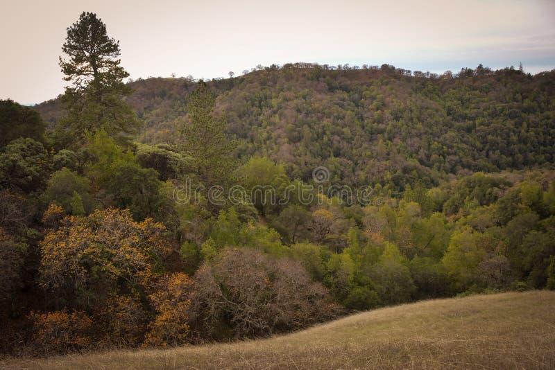 Парк штата Генри w Coe около холма CA Моргана стоковые изображения