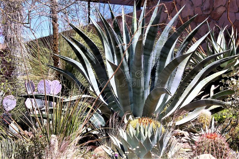 Парк штата дендропарка Boyce Томпсона, главный начальник, Аризона Соединенные Штаты стоковые изображения