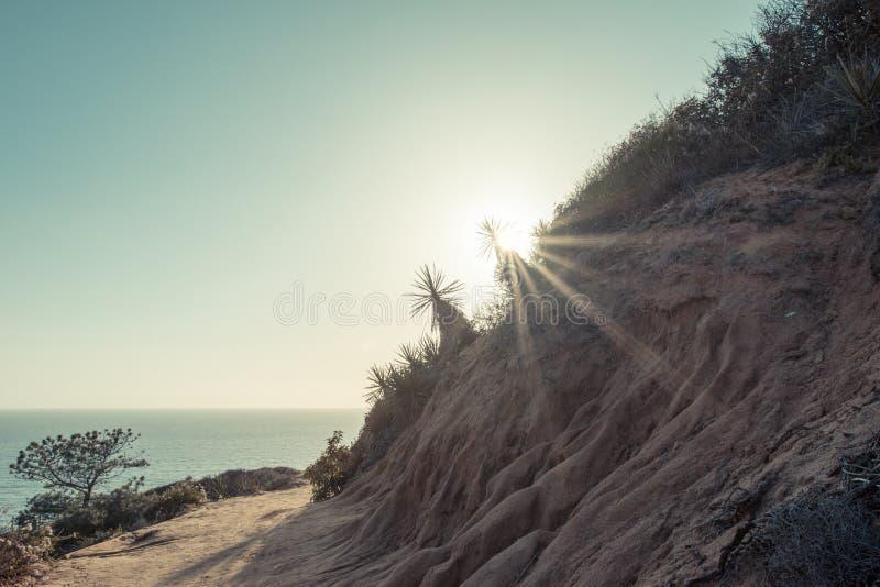 Парк штата сосен Torrey в Сан-Диего в солнце позднего вечера Пирофакел Солнця в изображении стоковые изображения